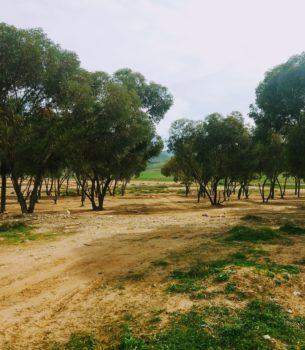 Maroko 2018/19 – plan podróży i uwagi praktyczne